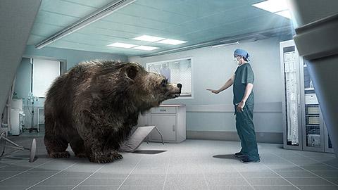 Bear OR